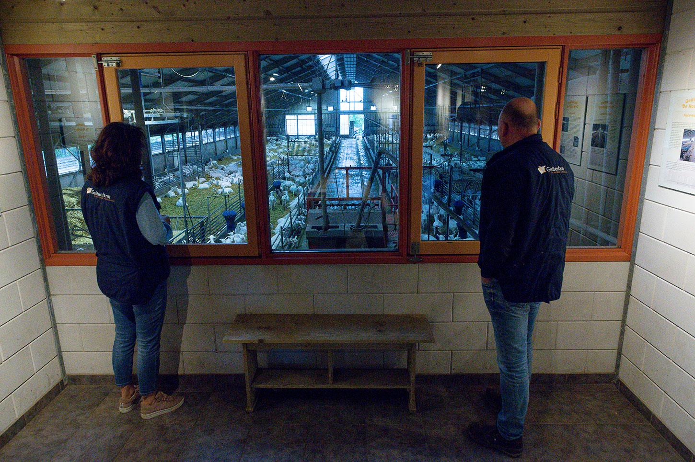 Geitenfarm de Houtsberg boeren van Nederweert