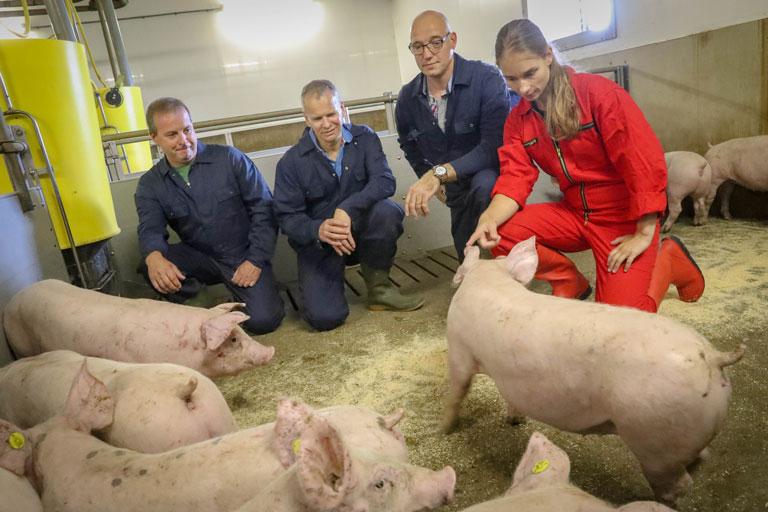 boeren van nederweert dierziekten voorkomen